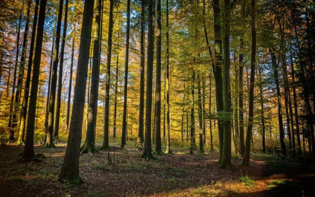 Quel avenir pour l'ONF et nos forêts publiques ?
