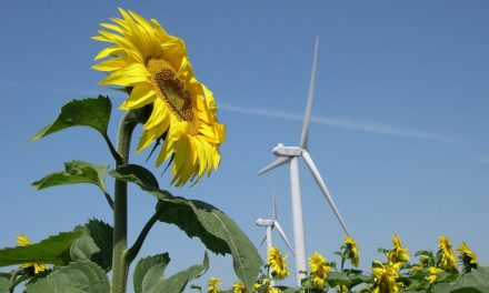 Budget 2019 – Crédits de la mission écologie : aucun effort budgétaire…