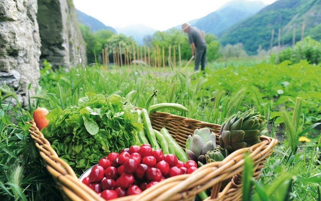 Loi Agriculture et Alimentation : Pour une alimentation saine et durable