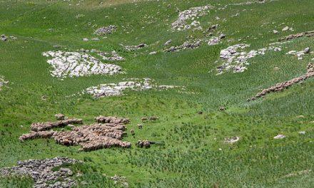 Intervention au Sénat pour la défense du pastoralisme